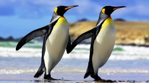 C:\Users\елена\Pictures\Emperor_penguins-300x168.jpg